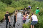 Collecting macroinvertebrates in stream, Rocky Mountain National Park